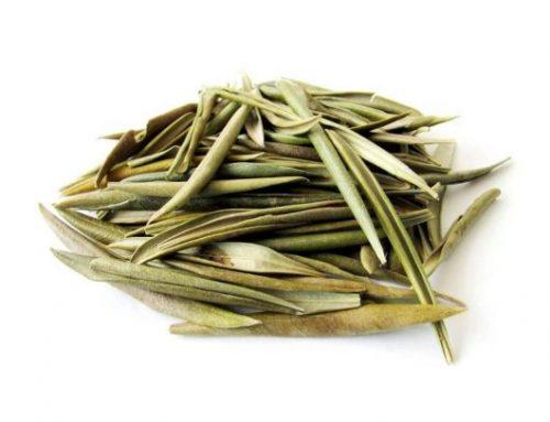 Chá de folha de oliveira
